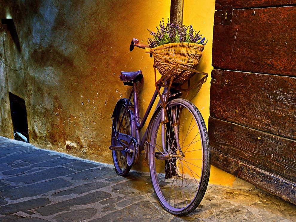 Picture of a bicycle with lavender in the basket, Montepulciano, Tuscany, Italy
