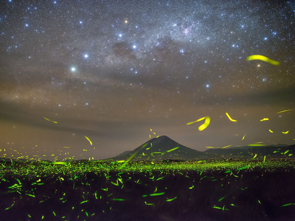 Picture of fireflies and stars at night in Tanzania