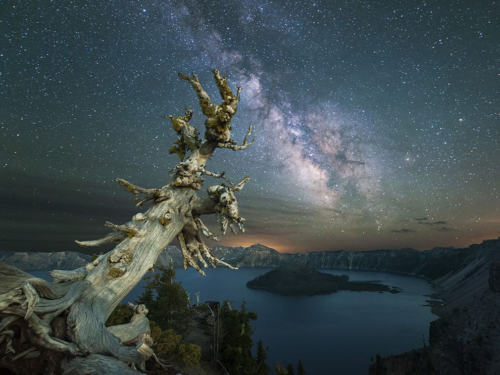 Picture of a dead tree overlooking Crater Lake with the Milky Way above, Oregon
