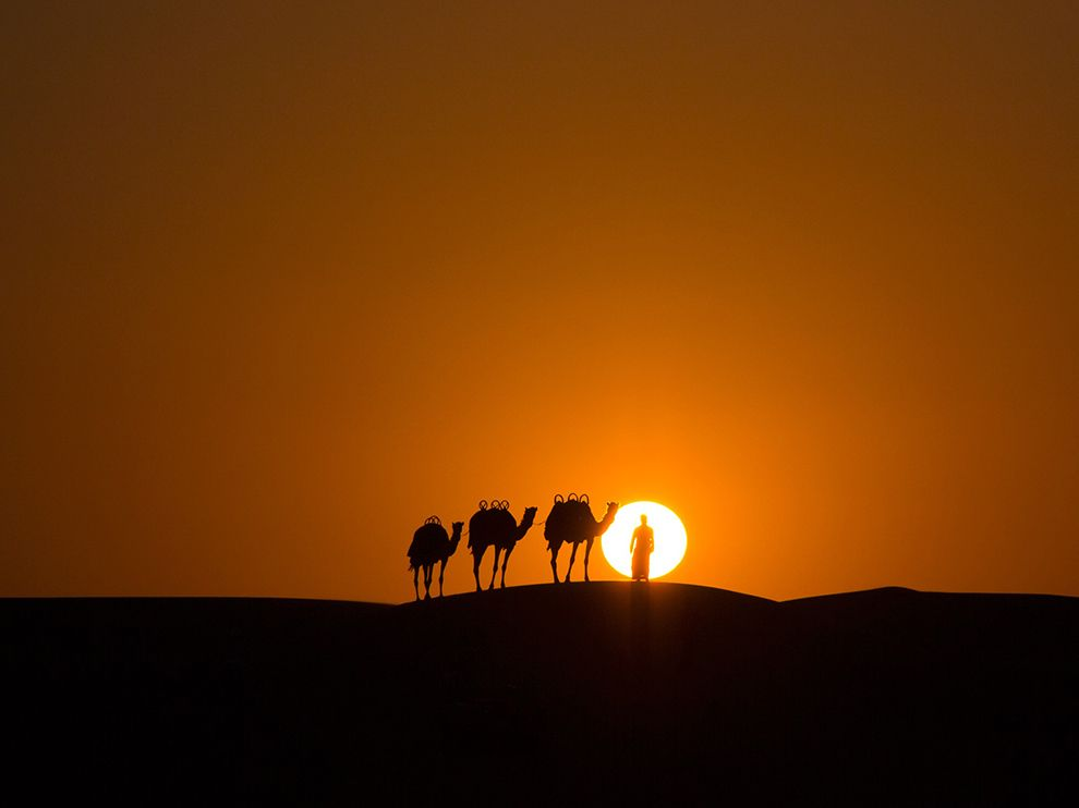 Picture of a camel caravan at sunset