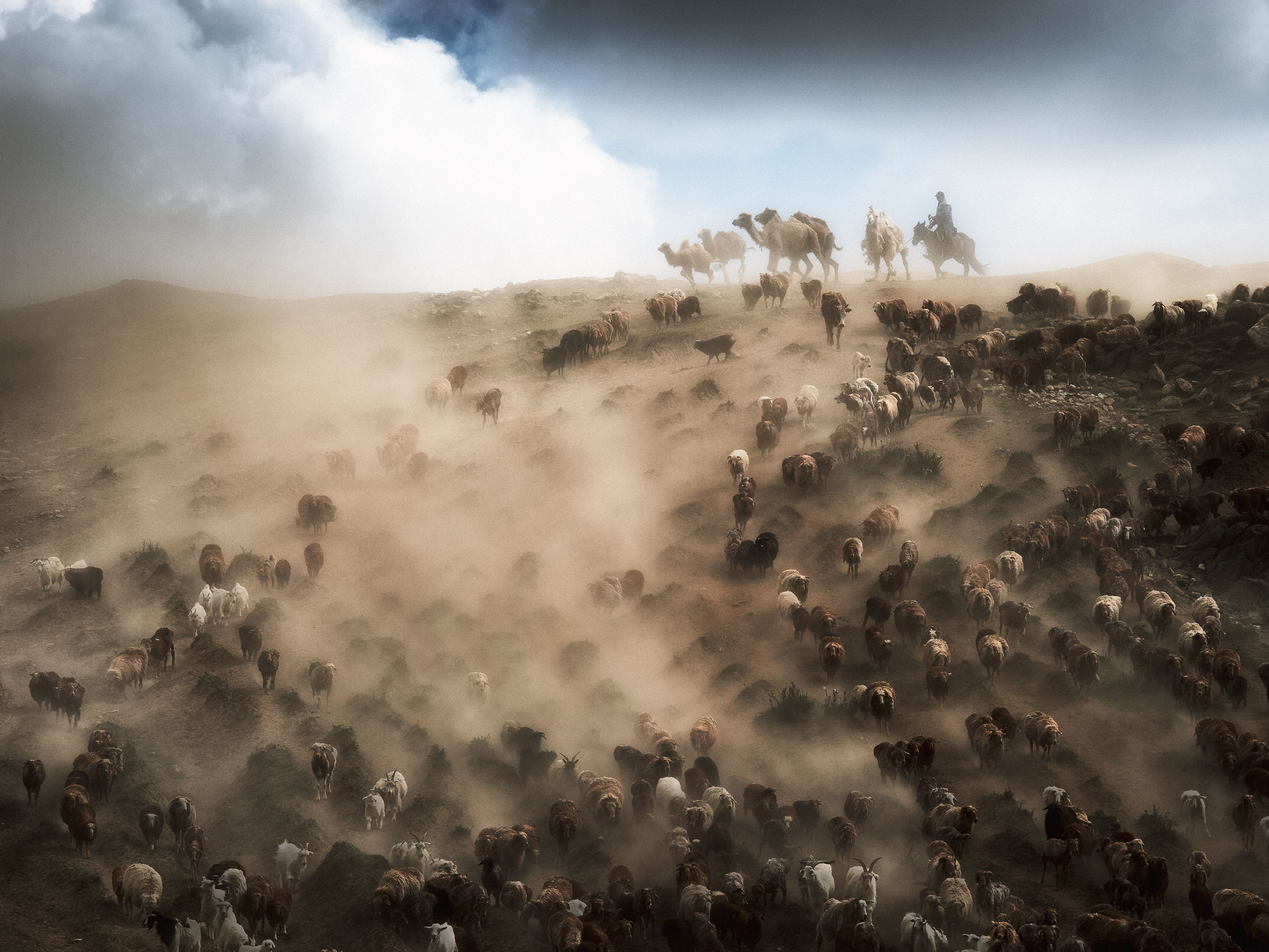 In far northern Xinjiang, China, herders guide camels, sheep, and cattle to new pastures, where they'll graze during the summer months. Summer in the area is warm, but very dry.