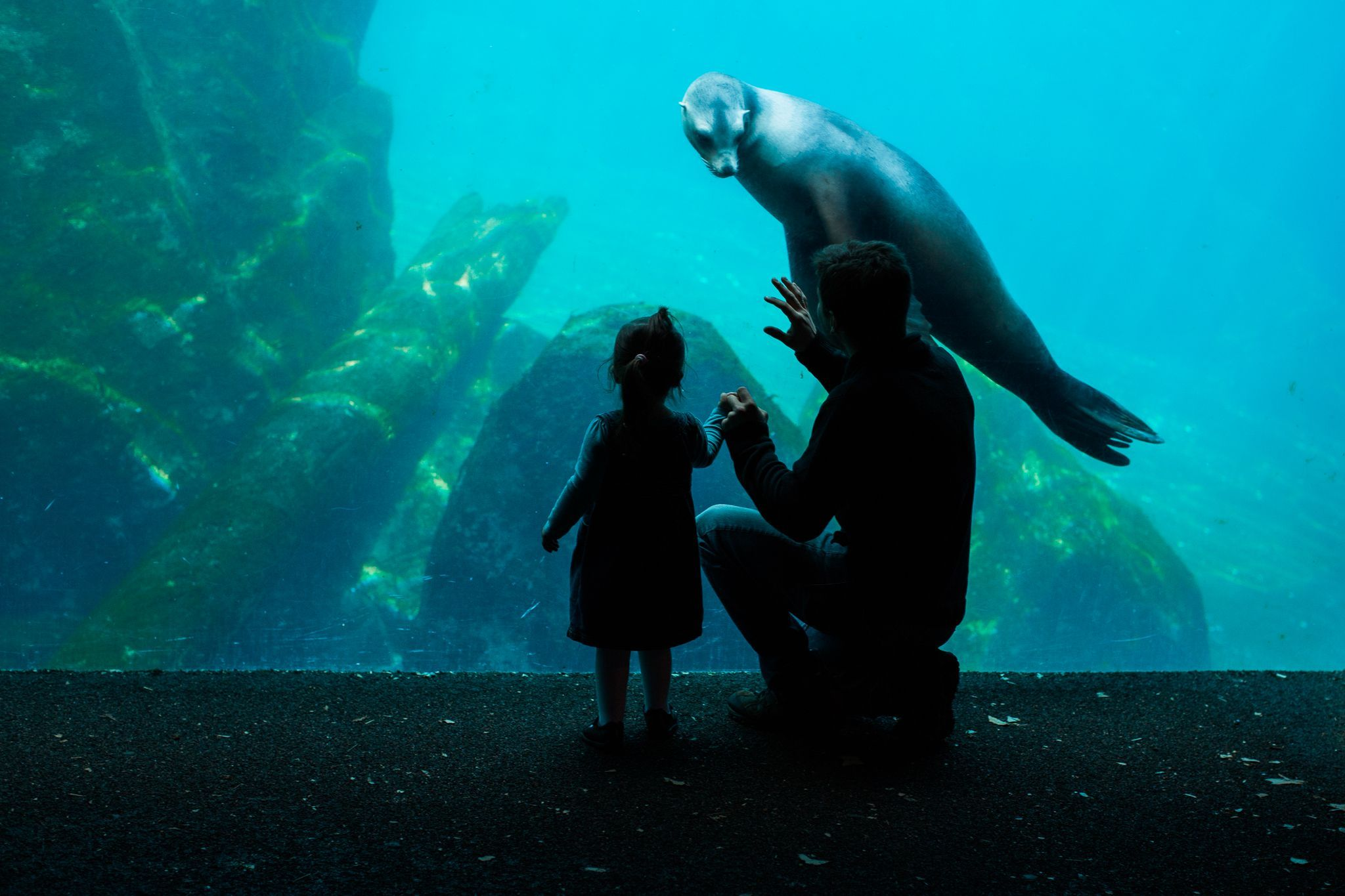 A parent and child share a moment with a sea lion at Smithsonian's National Zoo in Washington, D.C. Though they may be awkward on land, the animals can reach speeds of up to 30 miles per hour while swimming.